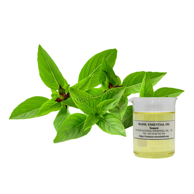 sweet basil oil vietnam